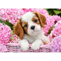 Pasji mladiček med rožami...