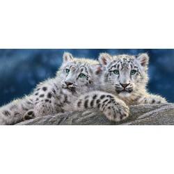 Mladiči belega leoparda...