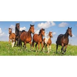 Nebesa za konje (600 kosov)...