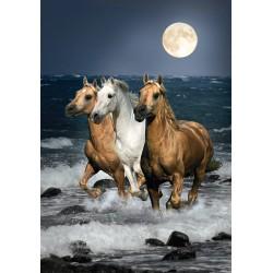 Konji v galopu (1500 kosov)...