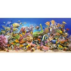Življenje pod morsko...