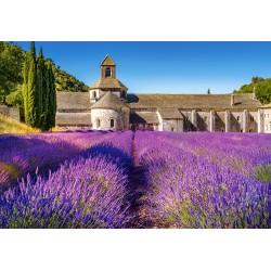 Provansa, Francija (1000...