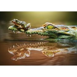 Pogumna žaba (500 kosov) -...