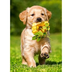 Kužek z rožo (60 kosov) -...