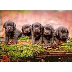 Pet pasjih mladičkov (120...