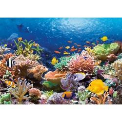 Koralni greben (1000 kosov)...