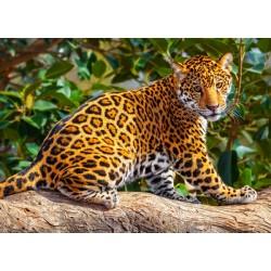 Mladi jaguar (260 kosov) -...