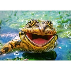 Žaba (500 kosov) -...
