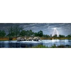 Humboldt: Čreda slonov...