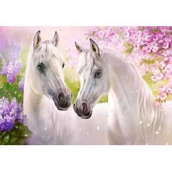 Romantična konja (1000...
